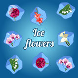 Beautiful flowers frozen in ice cubes Stock Photography