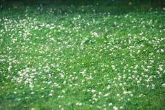 Beautiful flowers full bloom beside Lake Kawaguchi near Mount Fuji Japan.  royalty free stock photography