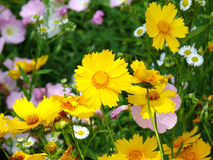 The beautiful flowers stock photography