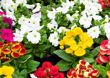 Beautiful flowers in garden Stock Photo