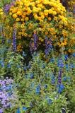 Beautiful flowers in the garden Stock Photos