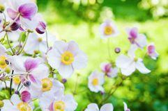 Beautiful flowers in the garden Royalty Free Stock Photo