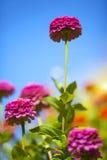 Beautiful Flowers. In the garden Stock Image