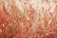 Beautiful Flowers. In the garden Royalty Free Stock Photos