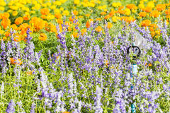Beautiful flowers Stock Images