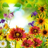 Beautiful flowers in the garden against the sun Royalty Free Stock Photos