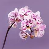 Beautiful flowers in garden Stock Photography