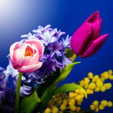 Beautiful flowers in garden Royalty Free Stock Photography