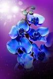 Beautiful flowers in garden Stock Image