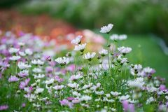 Beautiful flowers in the garden. Flowers with blur colorful background Royalty Free Stock Images