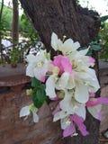 Beautiful  Flowers in a garden stock image