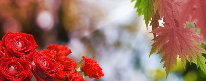 Beautiful flowers in the garden close up Stock Photo