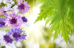 Beautiful flowers in the garden close up Stock Photography