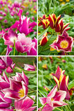 Beautiful flowers in the garden closeup Royalty Free Stock Image
