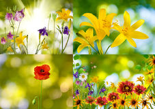 Beautiful flowers in the garden closeup Royalty Free Stock Photo