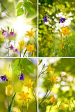 Beautiful flowers in the garden closeup Stock Image