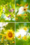 Beautiful flowers in the garden closeup Stock Images