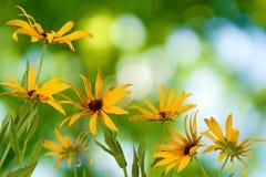 Beautiful flowers in the garden closeup Stock Photo