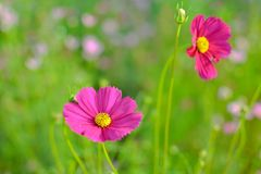 Beautiful flowers in the garden. Fresh flower. Beautiful flowers garden fresh goodtime nature bloom royalty free stock images