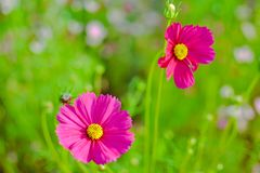 Beautiful flowers in the garden. Fresh flower. Beautiful flowers garden fresh goodtime nature bloom stock photo