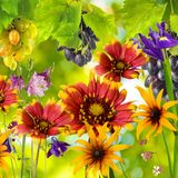 Beautiful flowers in the garden on a green background Stock Image