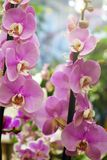 Beautiful flowers in the garden. Orchids.. Close-up Stock Photo