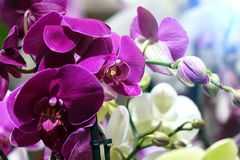 Beautiful flowers in the garden. Orchids. Close-up Royalty Free Stock Image