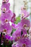 Beautiful flowers in the garden. Orchids. Close-up Stock Photos