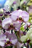 Beautiful flowers in the garden. Orchids. Close-up Stock Images