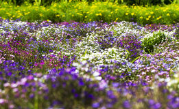 The beautiful flowers in the garden. The park in the summer, there is a piece of beautiful flowers, all kinds of flowers Stock Photography