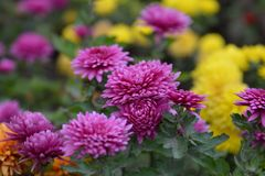 Beautiful flowers in a garden Royalty Free Stock Images