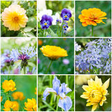 Beautiful flowers in garden Stock Photos