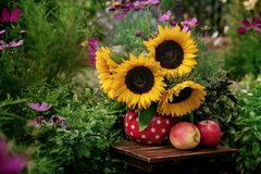 Beautiful flowers in the garden. Sunflowers in the vase and fresh apples Royalty Free Stock Photo