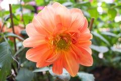 Beautiful flowers in  garden Royalty Free Stock Photo