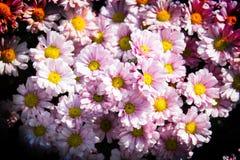 Beautiful flowers in  garden Stock Photos