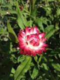 Beautiful garden flowers in a red-pink paleite. stock photos