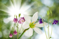 Beautiful flowers on green background closeup Royalty Free Stock Photography