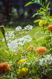 Beautiful flowers grow in the garden. Beautiful natural summer background. Vertical photo stock photo