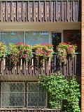 Beautiful flowers in home balcony, Lithuania. Many nice flowers in home balcony stock photo