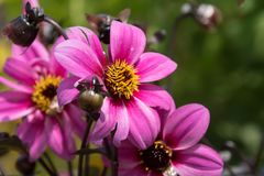 Beautiful flowers in an Illinois botanic garden royalty free stock images