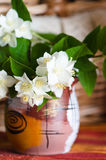 Beautiful flowers of a jasmin in a pot, close up Royalty Free Stock Images