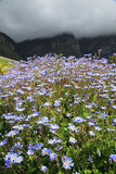 Beautiful Flowers in Kirstenbosch National Botanical Garden Stock Photography