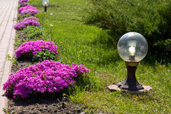 Beautiful flowers and  lantern Stock Images