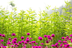 Beautiful flowers and leaves Stock Photography