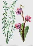 Beautiful Flowers of life royalty free illustration