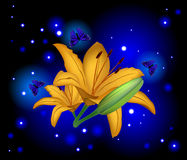 Beautiful flowers lily Stock Photography