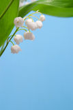 Beautiful flowers lily of the valley Royalty Free Stock Photos