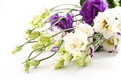 Beautiful flowers lisianthus Royalty Free Stock Photos