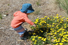 Beautiful flowers. Little boy picking flowers Stock Photography