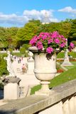 Beautiful flowers at the Luxembourg Garden in Paris stock photography